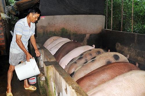 """""""Thủ phủ"""" chăn nuôi Đồng Nai e dè trước sức ép thịt giá rẻ nhập khẩu - 1"""