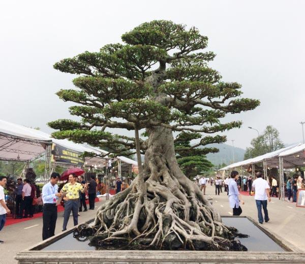 """Hàng ngàn """"cụ"""" bonsai, cây cảnh tiền tỷ hội tụ về Thủ đô - 1"""