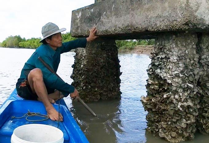 """Len lỏi, lặn lội, dùng búa đục săn đặc sản """"Viagra"""" dọc sông Cà Mau - 1"""