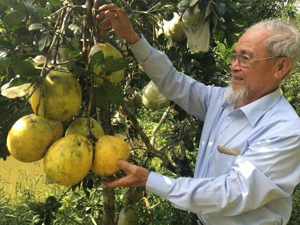 """""""Tiên ông"""" và trang trại """"5 trong 1"""" có tài ghép cây ra nhiều loại quả - 1"""