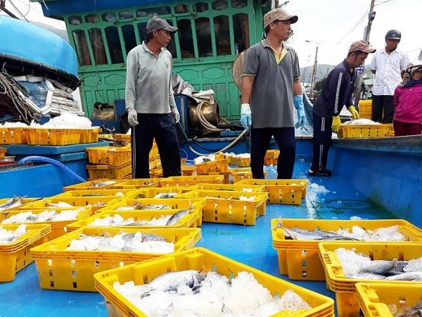 """Chạy bão số 9: Trúng """"số"""" với hơn 20 tấn cá ngừ, cá bò Trường Sa - 1"""