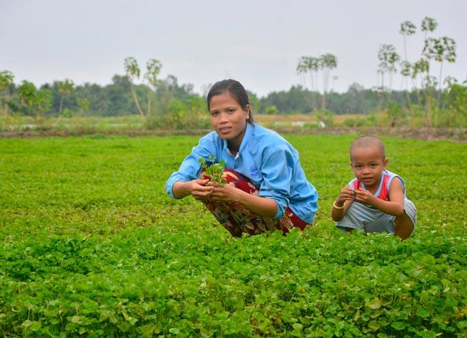 Lạ mà hay: Chỉ trồng loài rau mọc hoang mà kiếm bộn tiền - 1