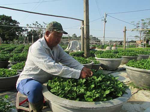 Học nghề trồng hoa, nông dân bỏ túi mỗi năm hơn trăm triệu - 1