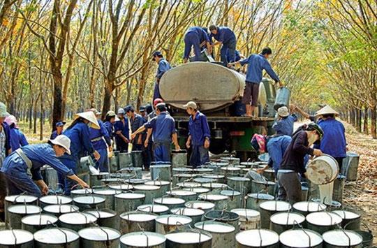 Xuất khẩu cao su thứ 3 thế giới, Việt Nam vẫn phải nhập hàng tỉ USD để sản xuất - 1