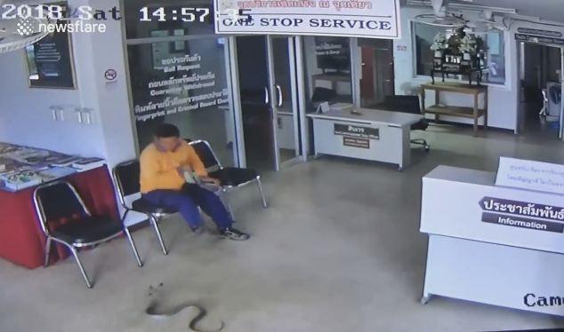 Thái Lan: Rắn vào đồn cảnh sát tìm người cắn và diễn biến ngộp thở - 1