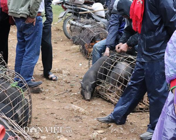 """Đặc sản lợn """"cắp nách"""" ở chợ phiên chợ vùng cao nơi núi rừng Sơn La - 3"""