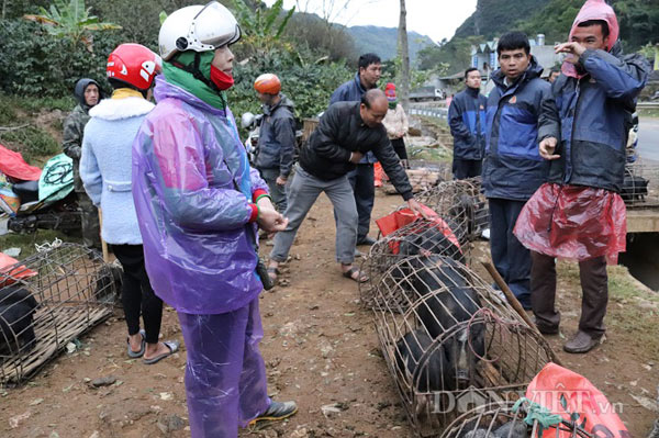 """Đặc sản lợn """"cắp nách"""" ở chợ phiên chợ vùng cao nơi núi rừng Sơn La - 5"""