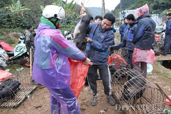 """Đặc sản lợn """"cắp nách"""" ở chợ phiên chợ vùng cao nơi núi rừng Sơn La - 6"""
