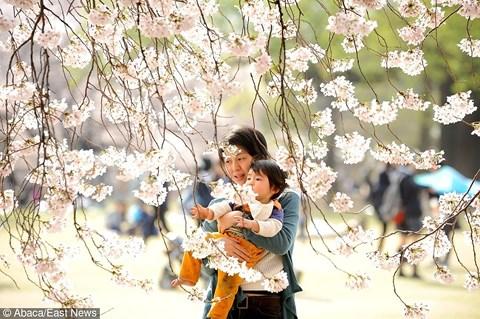 5 nguyên tắc vàng của người Nhật dạy con thông minh, kỷ luật từ nhỏ - 1