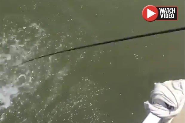 Video: Ngư dân khuấy động mặt nước, thứ xuất hiện sau đó gây hãi hùng - 1
