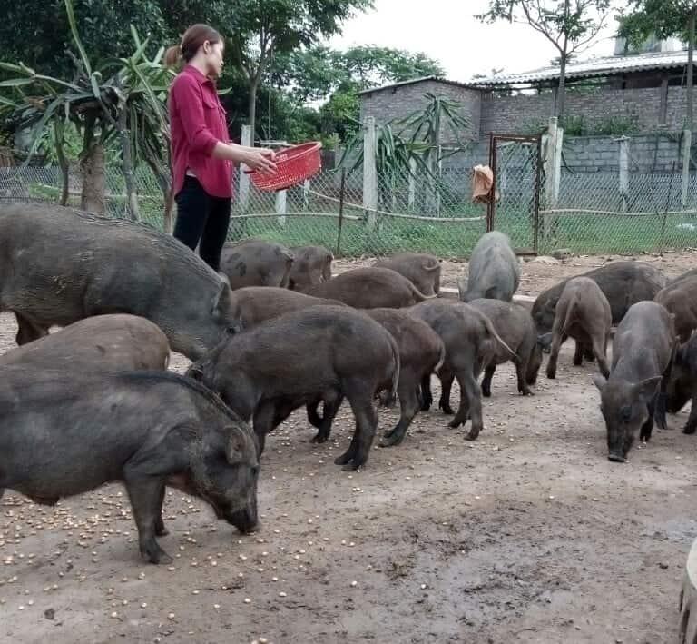 Gái xinh 9X bỏ công nhân về nuôi loài lợn lông cứng như chổi xể - 1