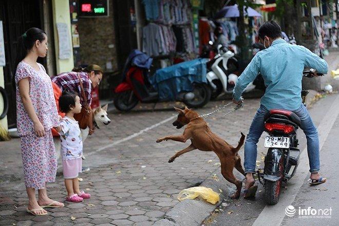 Hà Nội xem xét gắn chip cho chó để quản lý - 1