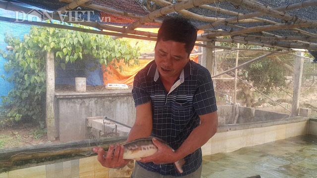 Ninh Bình: Nuôi cá lóc bán Tết, nông dân đếm tiền... mỏi cả tay - 1