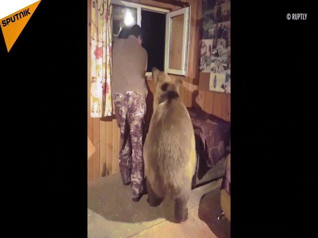 Phản ứng bất ngờ của người đàn ông khi gấu khổng lồ tiến đến ôm từ đằng sau
