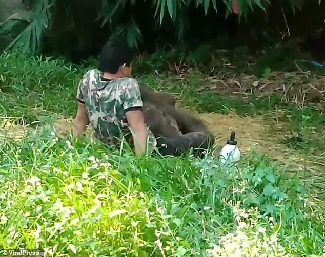 Con voi được giải cứu, chăm sóc và chuyện lạ xảy ra khi được thả về với đàn - 1