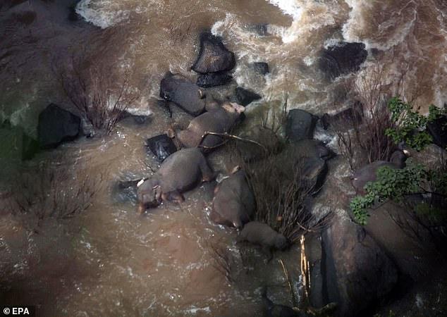 Thái Lan: Cứu voi non, 6 voi trưởng thành chết thảm ở thác tử thần - 1