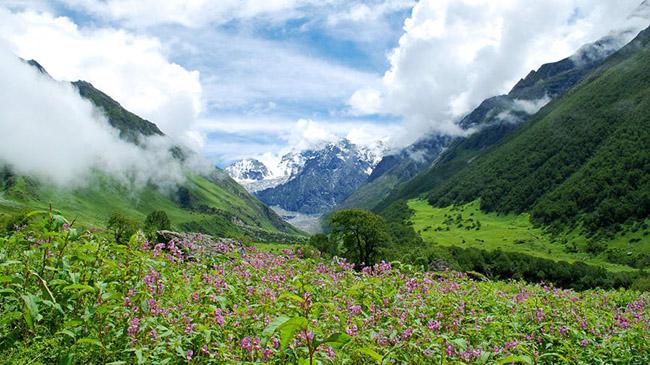 Uttarakhand: Đây là một thung lũng hoa ẩn mình giữa những ngọn núi cao của dãy núi Himalaya và dãy núi Zanskar. Thung lũng trở nên sống động vào mùa hè với những bông hoa nở tưng bừng, rực rỡ khắp mọi nơi.