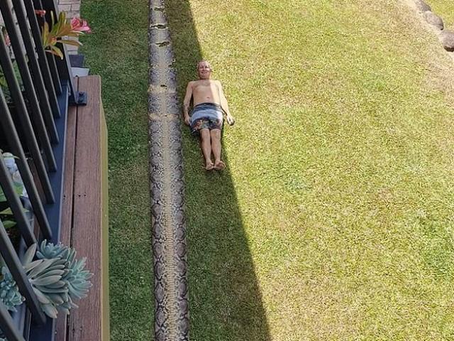 Video: Đi dạo quanh vườn, tình cờ phát hiện dấu vết trăn khổng lồ dài 8m