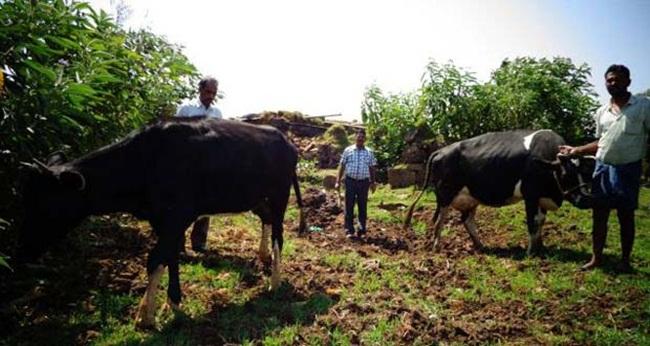 Trong đó, đường, bauxite, gạo và vàng chiếm tới 70% - 75% nguồn thu từ xuất khẩu của Guyana.