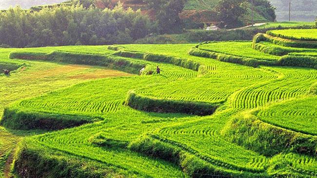 Hapcheon daraknon: Những cánh đồng lúa bậc thang của Hapcheon ở tỉnh Nam Gyeongsang là một cảnh tượng tuyệt vời.