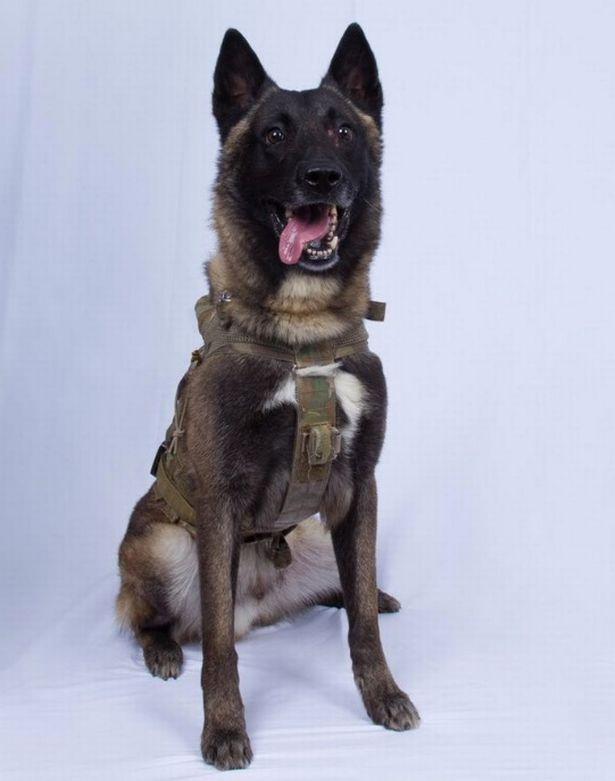 Số phận chú chó anh hùng dồn thủ lĩnh tối cao IS vào đường cùng - 1