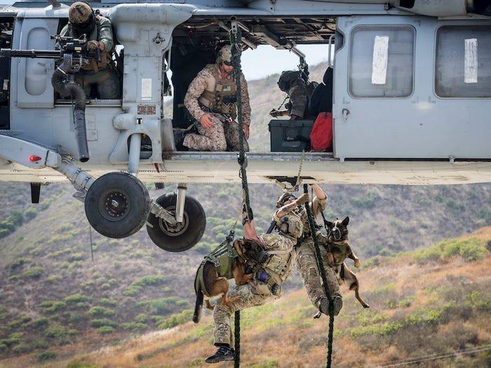 Bí mật về đội chó đa nhiệm 'không bao giờ sủa' của đặc công Delta, Mỹ - 1