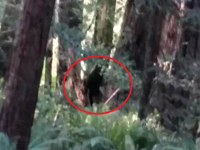 """""""Người sói"""" cao gần 3m xuất hiện, giết thú nuôi kinh hoàng ở Mỹ?"""