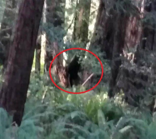 """""""Người sói"""" cao gần 3m xuất hiện, giết thú nuôi kinh hoàng ở Mỹ? - 1"""