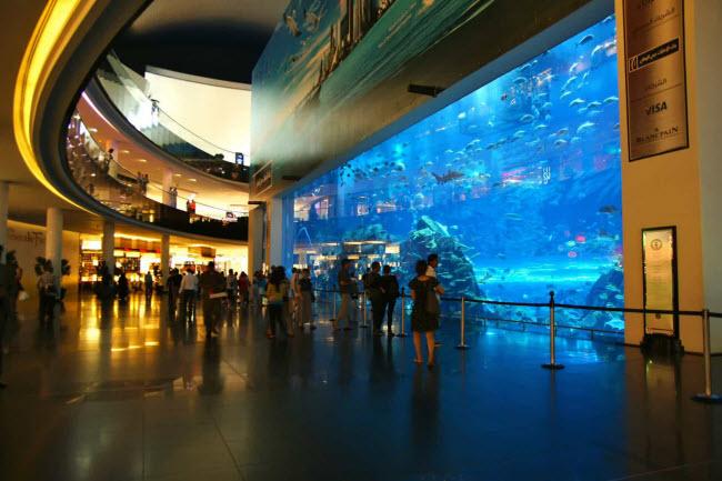 Vườn thú và công viên hải dương Dubai: Nằm trong trung tâm mua sắm Dubai, vườn thú là nơi sinh sống của hơn 33.000 động vật dưới nước bao gồm loài cá mập hổ khổng lồ.