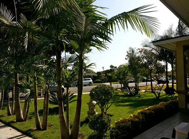 Bên ngoài căn biệt thự có nhiều cây xanh mát, khoảng sân rộng với màu xanh mướt mắt.
