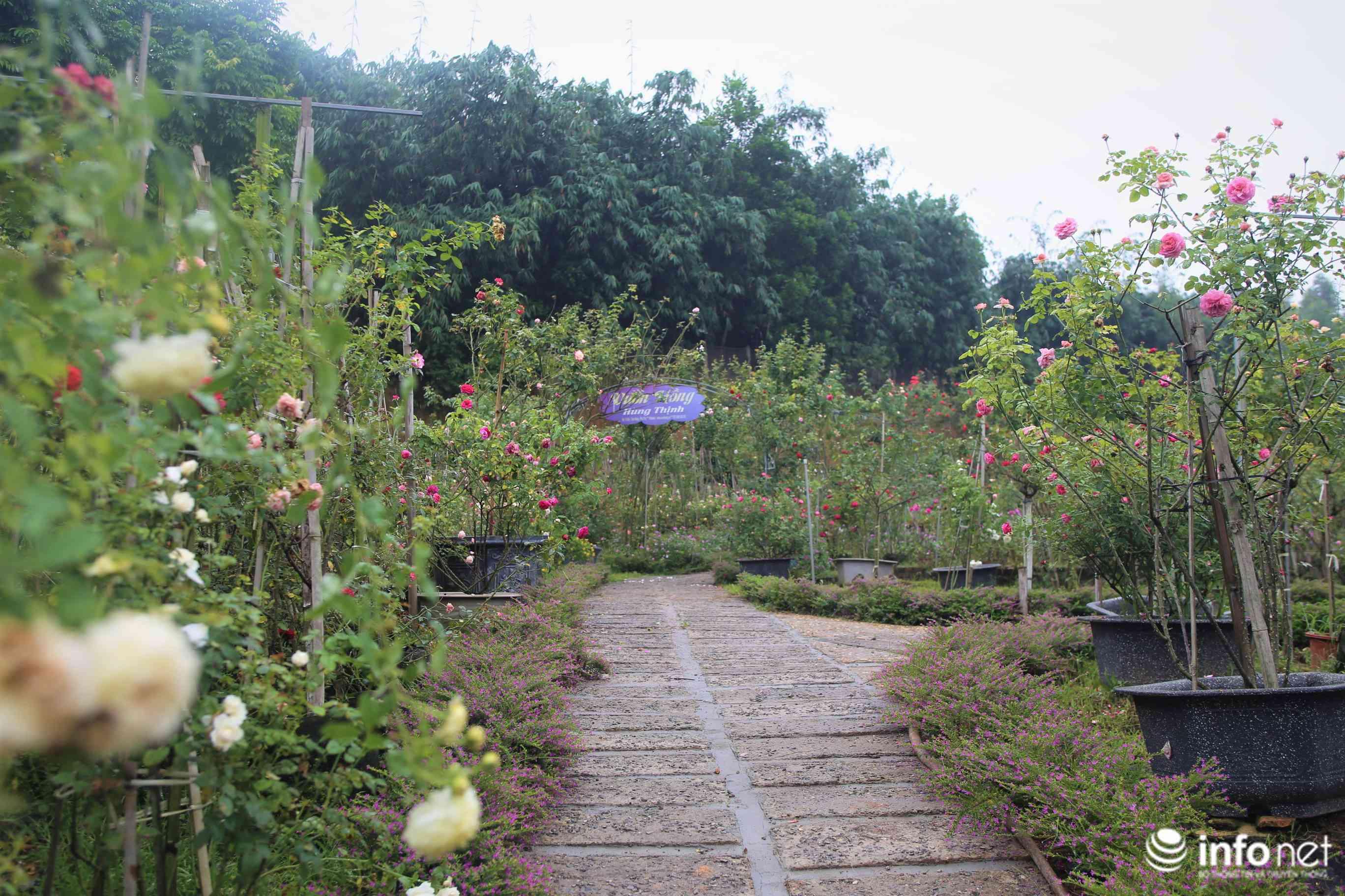 Chàng thanh niên 30 tuổi trồng trại hoa hồng thu hàng trăm triệu mỗi năm - 1