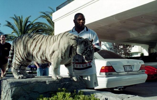 """Mike Tyson nuôi hổ dữ 250kg: Choáng váng chi phí 53 tỷ đồng cho """"thú cưng"""" - 1"""