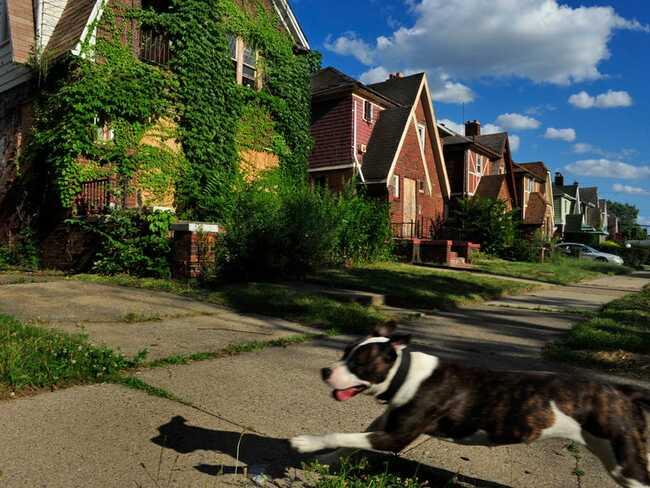 Các ngôi nhà trên nền tảng Đấu giá của Detroit đi kèm với mọi thông tin, từ báo cáo tình trạng tài sản đến các chuyến tham quan miễn phí trước ngày đấu giá.