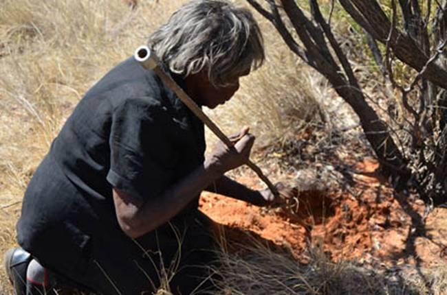 Ấu trùng sâu bướmWitchetty Grub là một đặc sản được nhiều người thích của Australia.