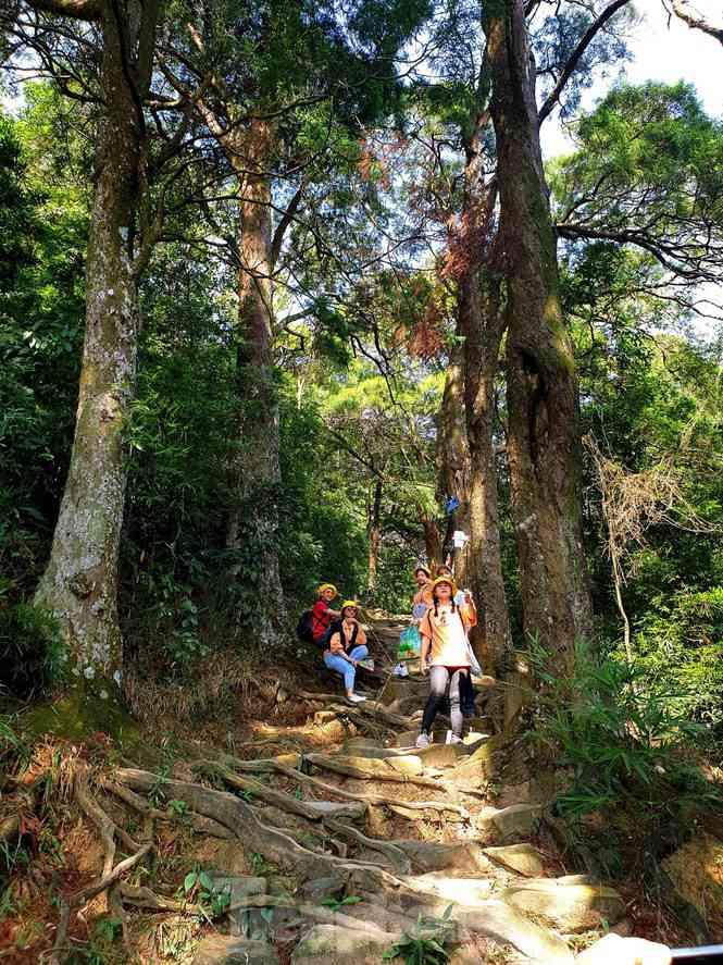 Độc đáo hàng cây trồng cổ nhất Việt Nam giữa non thiêng Yên Tử - 1