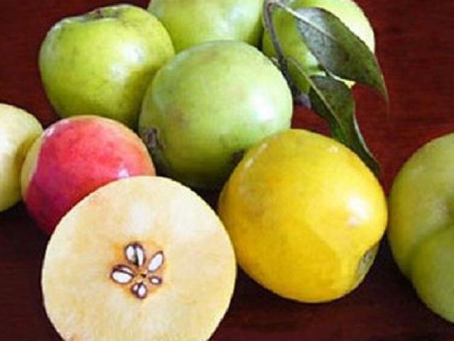 """Những loại quả rừng độc, lạ từng 1 thời khiến người Việt """"phát cuồng"""""""