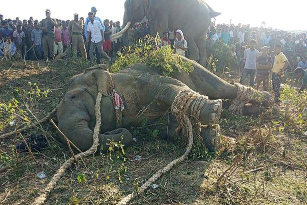 Giết hại 70 người, voi mang tên trùm khủng bố Bin Laden bị bắt sống - 1