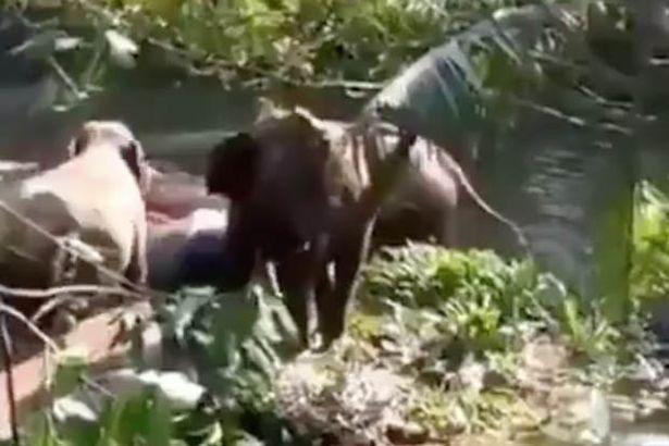 Video: Khoảnh khắc voi mẹ cảm tạ người tốt bụng cứu sống voi con - 1