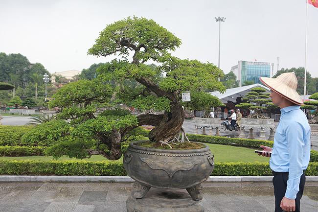 Tại triển lãm cây cảnh diễn ra ở TP. Thanh Hóa mới đây, cây mận rừng bonsai được giao dịch với giá trên 1 tỷ đồng khiến dân chơi cây cảnh sửng sốt.