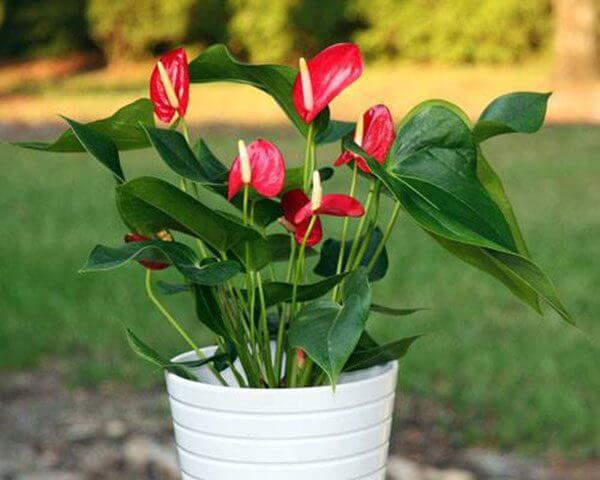 """Những loại hoa đẹp rực rỡ nhưng độc """"chết người"""" - 4"""