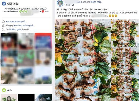 """""""Quốc bảo"""" Sâm Ngọc Linh thành hàng chợ, bán đầy trên mạng xã hội - 1"""