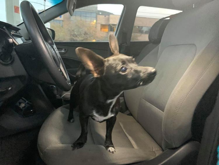 Để chó trong ô tô, lát sau thấy xe lừ lừ chạy lùi ngang qua đường 4 làn đầy xe đang chạy - 1