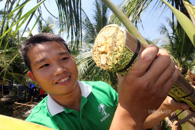 Nghề cực lạ ở Việt Nam: Massage hoa dừa để kích thích chảy... mật - 1
