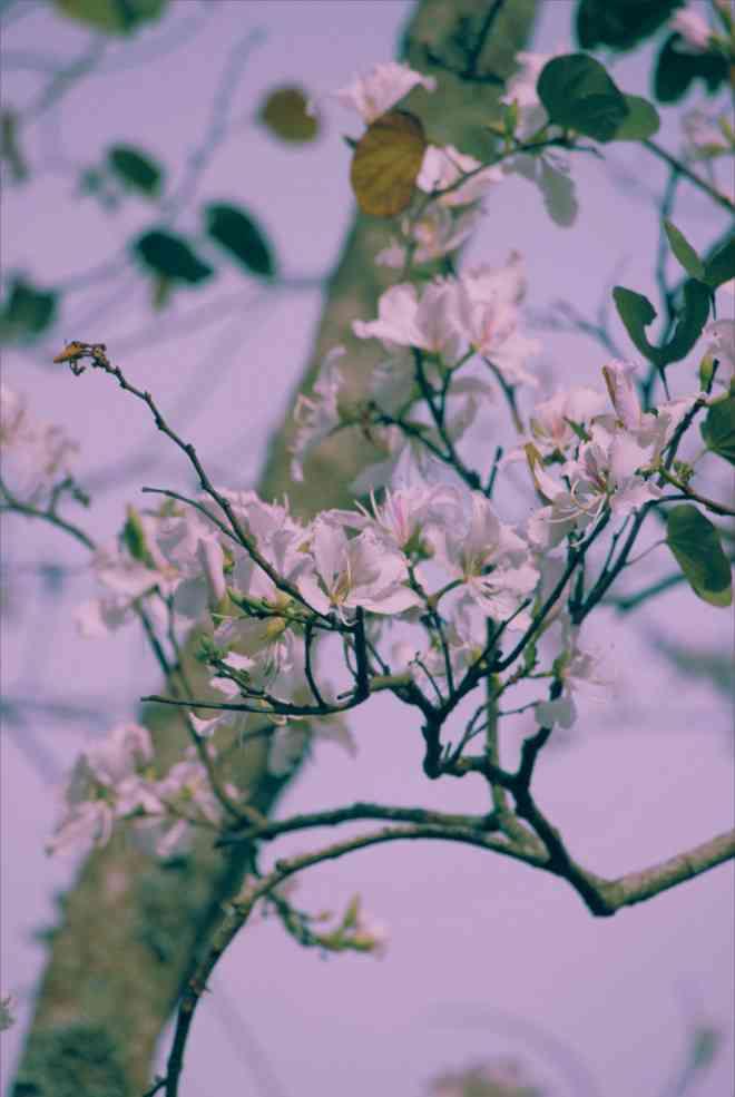 """Đến Đà Lạt ngắm những bông hoa """"tuyết trắng"""" - 1"""