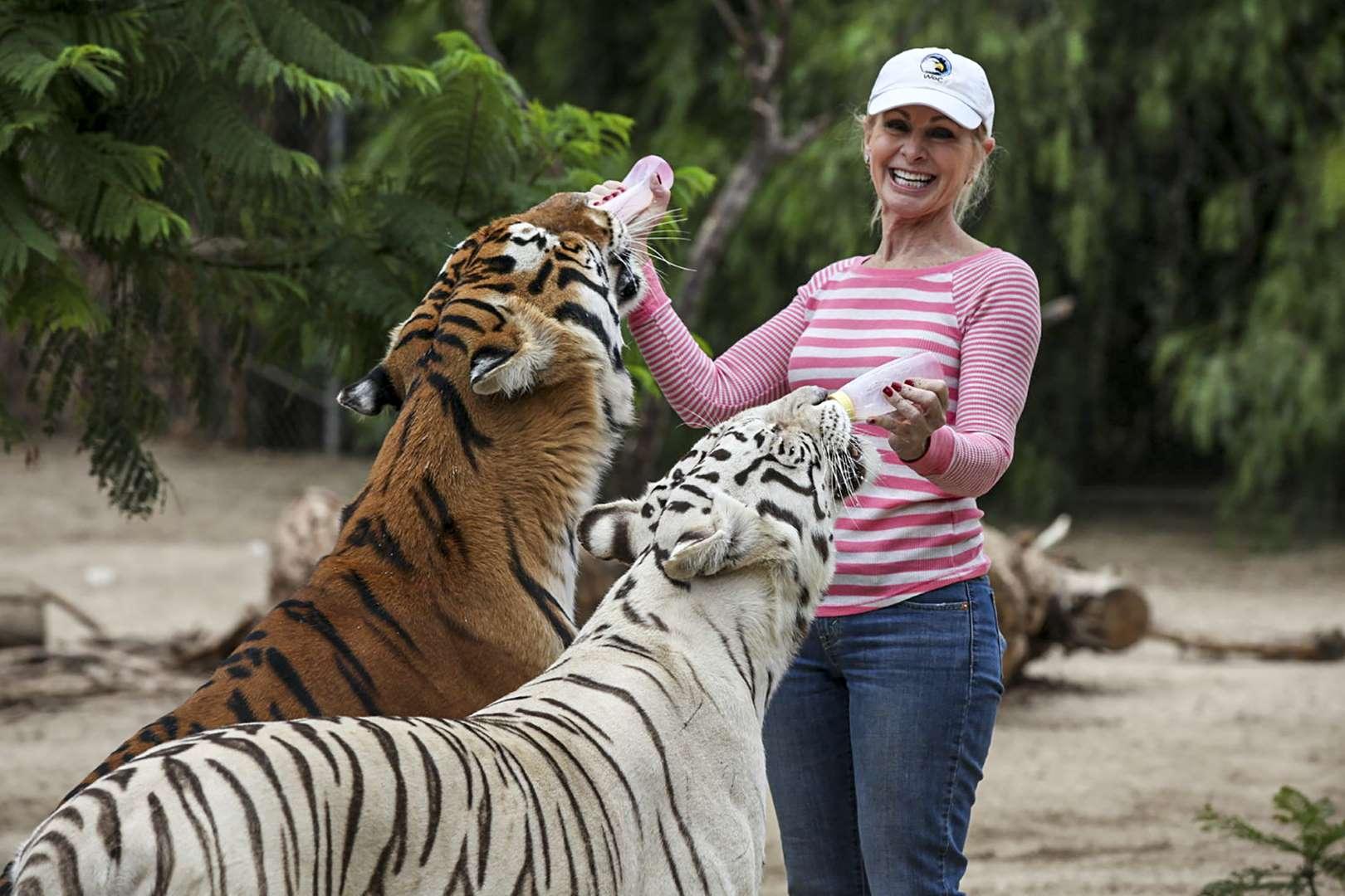 Ngày ngày chơi với bầy hổ nuôi từ nhỏ, bỗng một ngày bị hai con tấn công kinh hoàng - 1