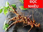 """Tin tức sức khỏe - """"Thoát"""" Gai cột sống chèn ép thần kinh, tắc nghẽn mạch nhờ thảo dược này"""
