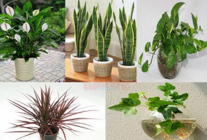 Những loại cây trồng trong nhà vừa lọc sạch không khí, vừa mang tài lộc cho chủ - 1