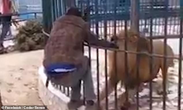 Video: Thò tay vào chuồng sư tử, nhân viên vườn thú nhận bài học nhớ đời - 1