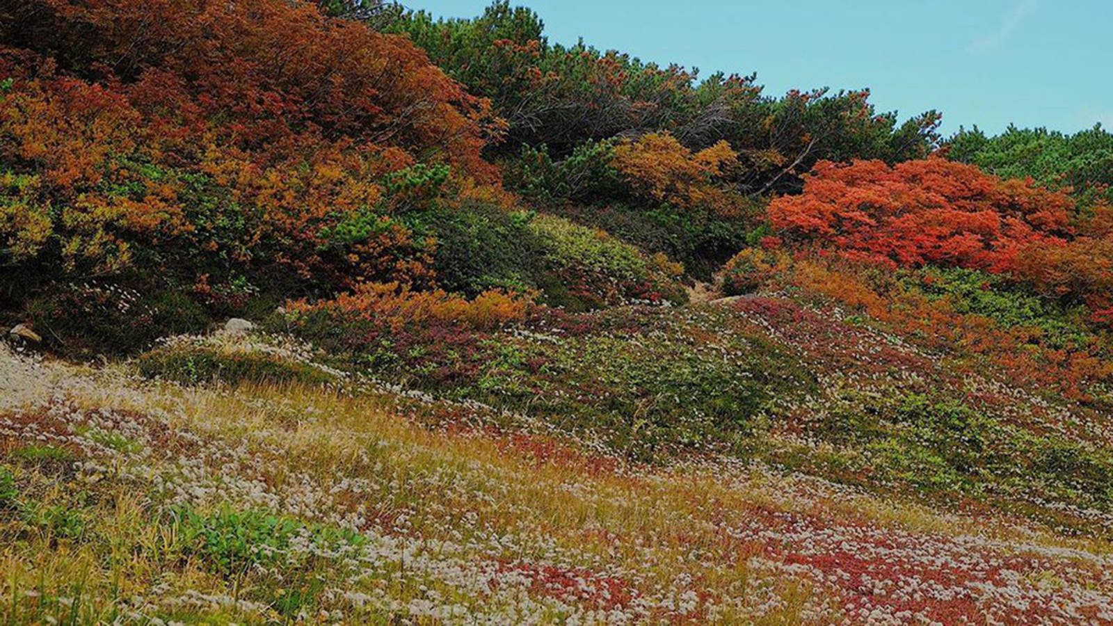 Ít người biết nơi này đón mùa thu sớm nhất Nhật Bản - 2