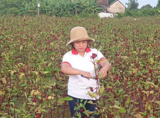 Từ món quà chồng tặng, cô gái 25 tuổi người Huế có thu nhập cả trăm triệu đồng mỗi năm - 1